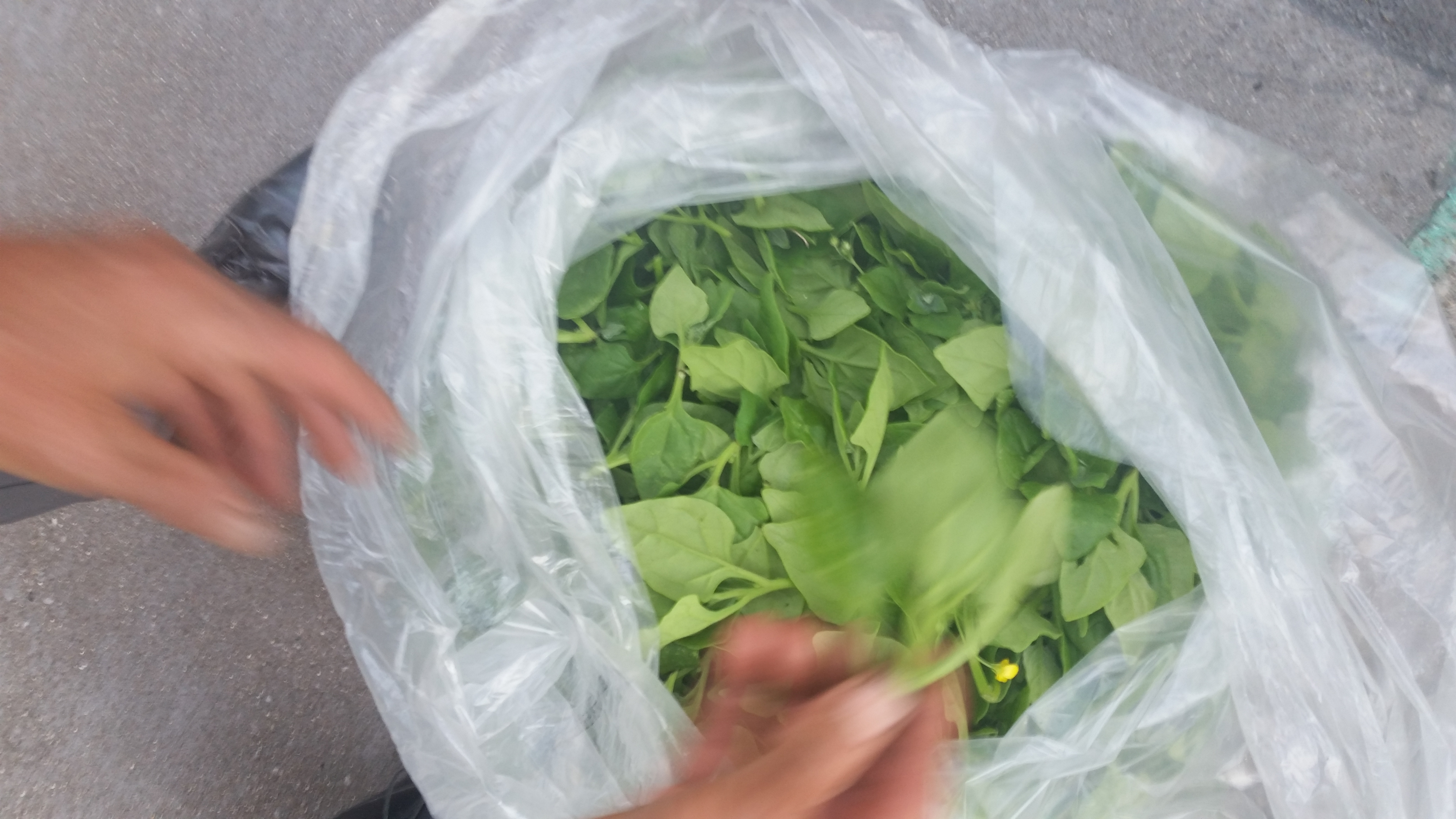New Zealand Spinach delivery from Erik's Organics, LLC