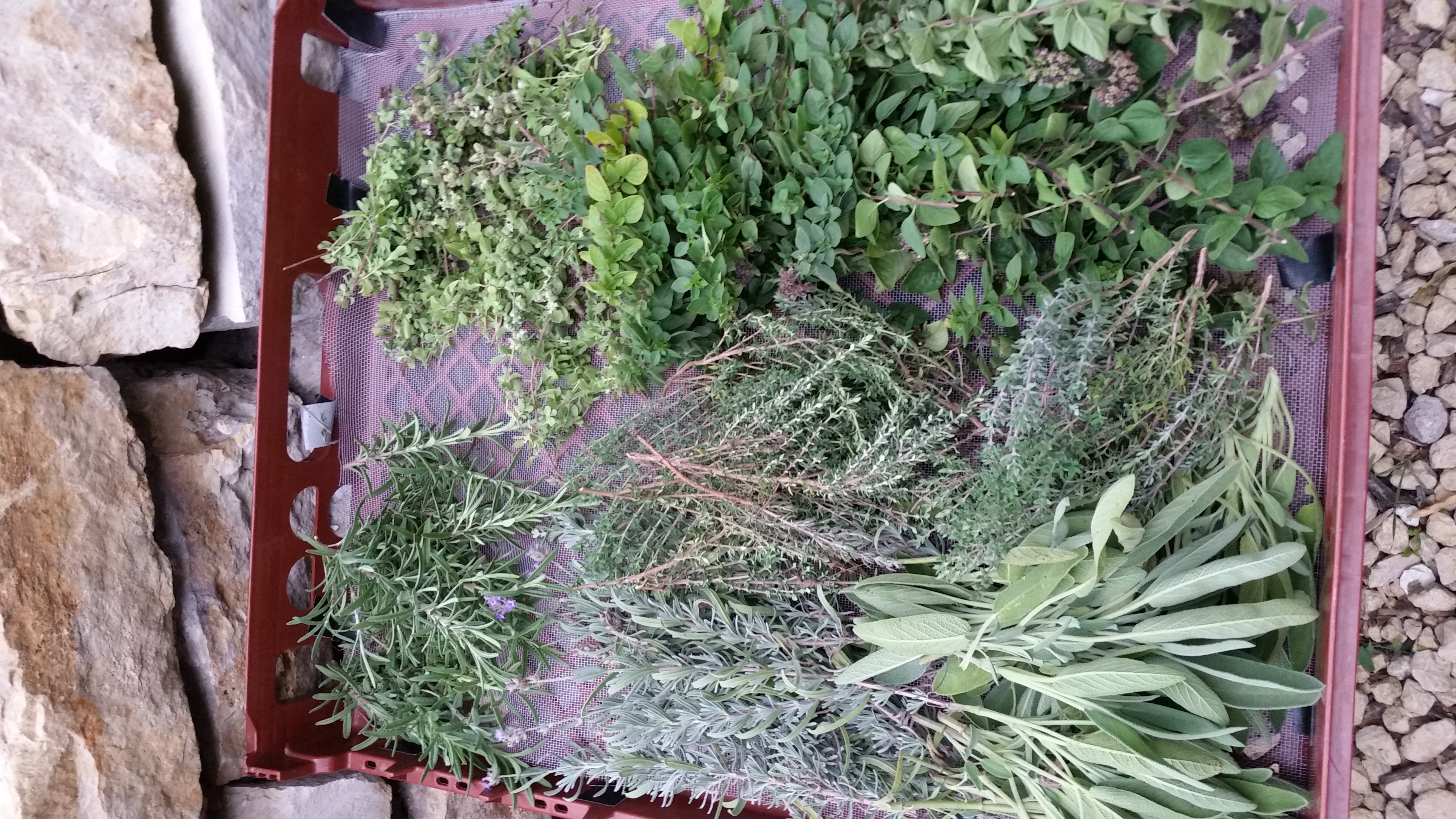herbs to dry, 2020