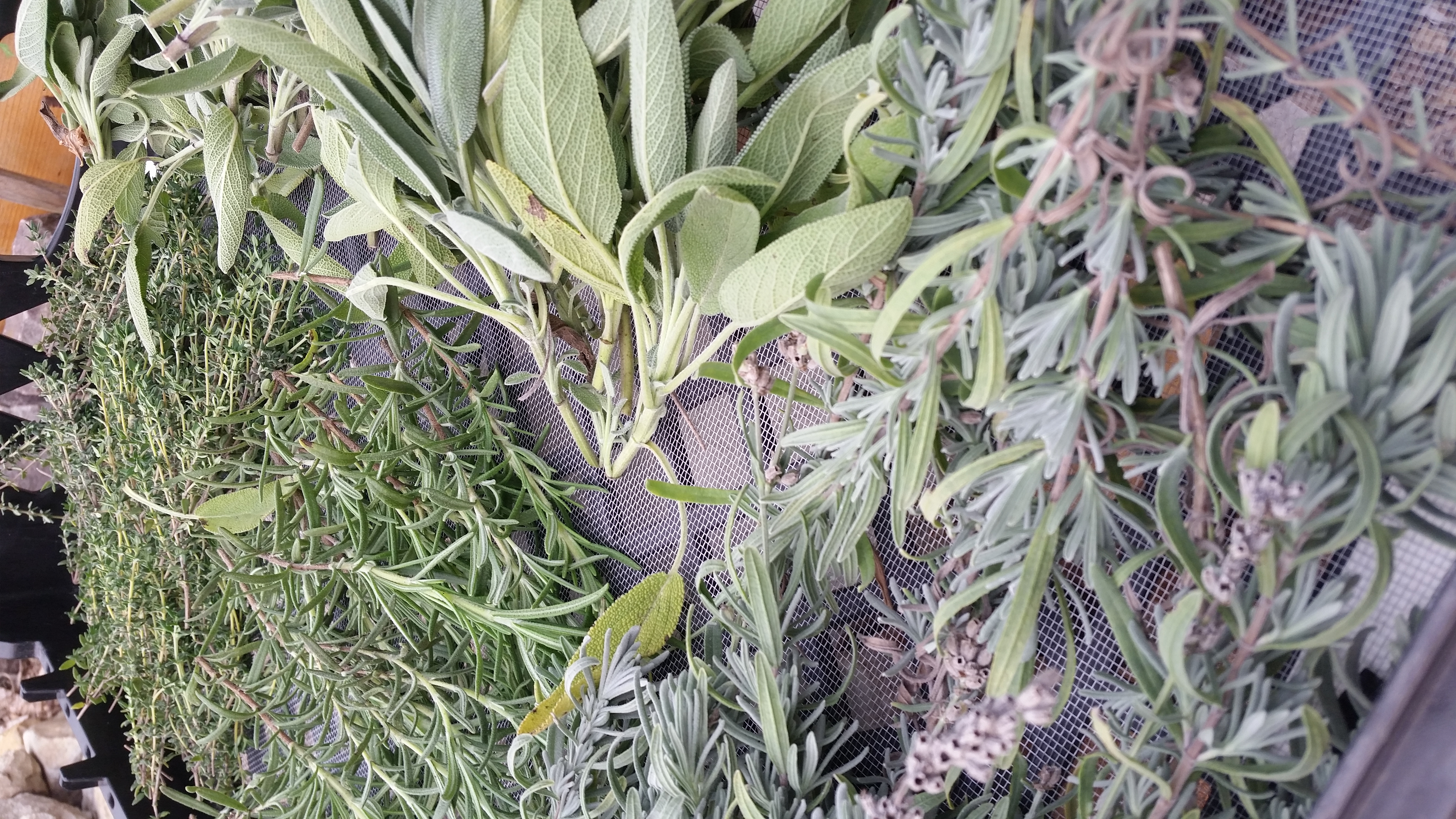 herbs picked to dry, 2020
